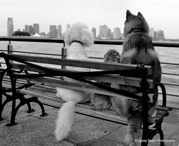 contact new york pet and animal photographer people pets and