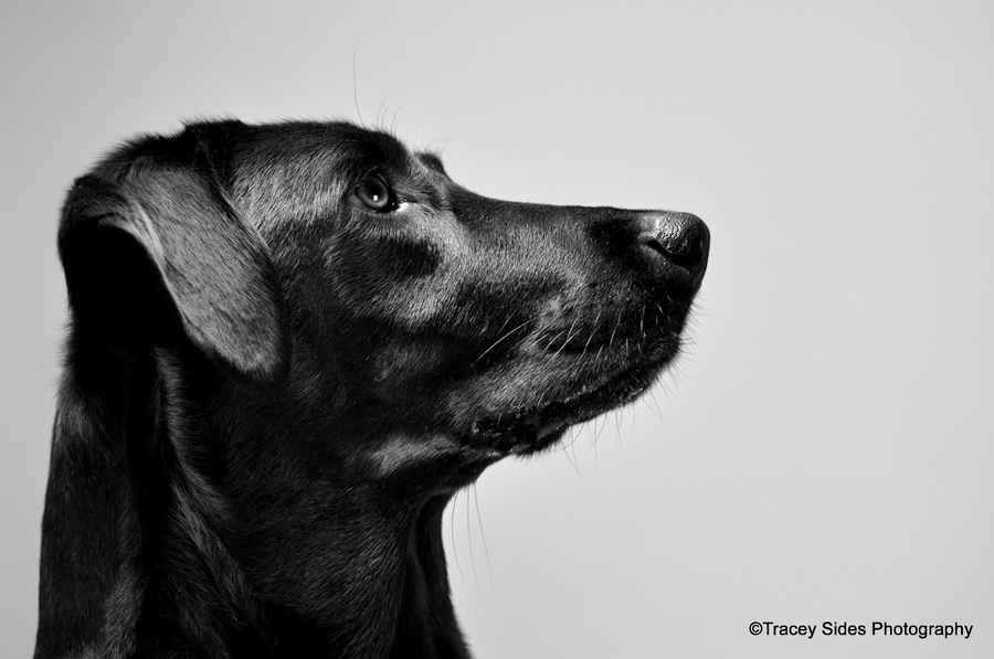 New York Pet and Animal Photographer, people pets and animals - Tracey Sides Photography